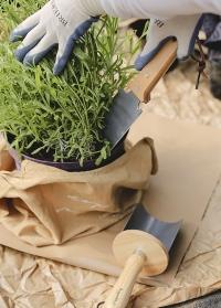 Садовые инструменты для контейнерных растений RHS Container Gardening Burgon & Ball фото.jpg