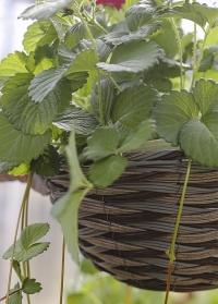 Подвесная плетеная корзина из искусственного ротанга  для уличных растений Pinto Smart Garden фото