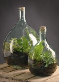 Террариум для цветов в бутылке AGG47 Esschert Design фото