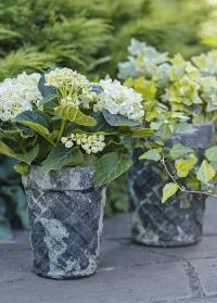 Старинные керамические горшки для цветов AC147 Aged Ceramic от Esschert Design фото