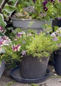 Поддоны из терракоты для цветочных горшков AT47 Esschert Design фото