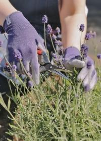 Флористические перчатки эластичные тонкие для работы с цветами в подарок флористу от Consta Garden фото