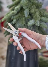Японские цветочные ножницы для флористов TS-66EXP Chikamasa фото