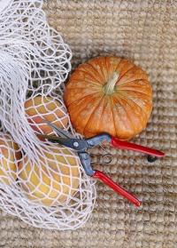 Подарок садоводу огороднику - японские ножницы для цветов и фруктов Chikamasa фото