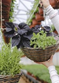 Подвесное плетеное кашпо-корзина из искусственного ротанга для уличных растений Milano Faux Rattan Smart Garden фото
