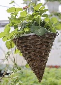 Подвесное плетеное кашпо из искусственного ротанга для уличных цветов Hazel Faux Rattan Smart Garden фото