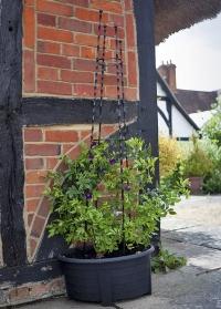 Опора обелиск для вьющихся растений Regency Obelisk Smart Garden картинка