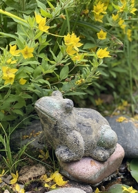 Садовая фигурка Лягушки из состаренной керамики AC166 Esschert Design фото