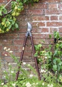 Садовый сучкорез с деревянными ручками National Trust Burgon & Ball фото