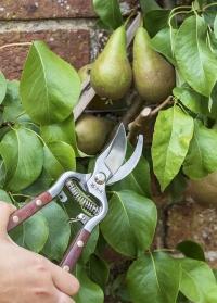 Подарок мужчине-садоводу - лучший секатор с деревянными ручками Burgon Ball в интернет-магазине Consta Garden фото