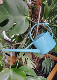 Лейка для комнатных цветов от Burgon & Ball в подарок цветоводу от Consta Garden фото