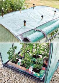 Выращивание помидоров в мобильной теплице Tomato GroZone Max от Smart Garden фото