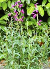 Опора для цветов Gro-Stems от Smart Garden фото