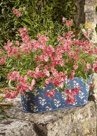 Кашпо овальное металлическое Flower Girl Collection Briers, L