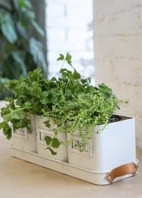 Стильный набор эмалированных кашпо для выращивания трав на подоконнике Garden Suppliers от Burgon Ball фото