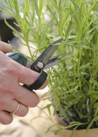 Приспособления для сбора урожая Burgon and Ball фото.jpg