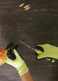 Ножницы флористические для цветов с яркими ручками Burgon and Ball фото.jpg