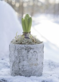 Кашпо цветочное из бетона с имитацией березовой коры прекрасно подходит для зимних композиций фото