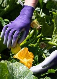 Флористические перчатки с нитрилом для цветов и работы в саду Violet Colors AJS-Blackfox фото