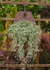 Настенное кашпо-конус из искусственного ротанга идеально для выращивания цветов Chestrernut Smart Garden фото