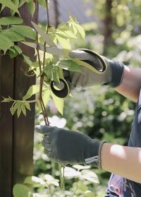 Флористические перчатки AJS Blackfox для работы с цветами подарить флористу фото
