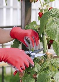 Перчатки флористические Colors Blackfox - подарок для флориста от Consta garden фото