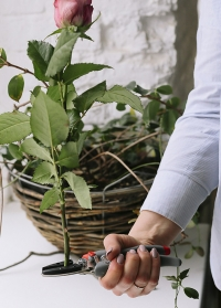 Подарок садоводу для роз - японский секатор для роз и цветов Chikamasa фото