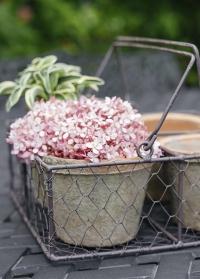 Горшки для растений из состаренной терракоты в металлической корзинке AT12 Esschert Design фото