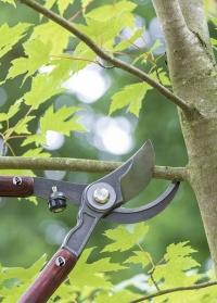 Сучкорез садовый для обрезки деревьев National Trust от Burgon & Ball фото