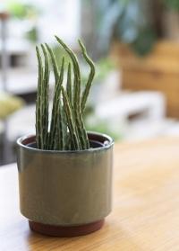 Стильное керамическое бохо кашпо для комнатных растений Malibu Green GIG/MALMGN от Burgon & Ball фото