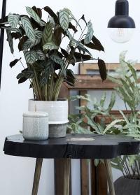 Керамическое кашпо для растений Helsia для интерьера в скандинавском стиле от Lene Bjerre картинка