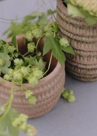 Терракотовое кашпо для комнатных растений Jillia 14 см Lene Bjerre фото