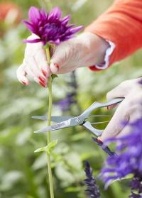 Ножницы для цветов профессиональные Burgon & Ball