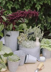 Садовый оцинкованный инвентарь - ведро для инструментов, кашпо для цветов, лейки от Esschert Design фото