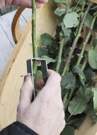 Инструмент для удаления шипов и листьев Burgon & Ball